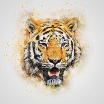 Sub-Gallery ID: 3643 Tigers