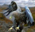 Preview Bird
