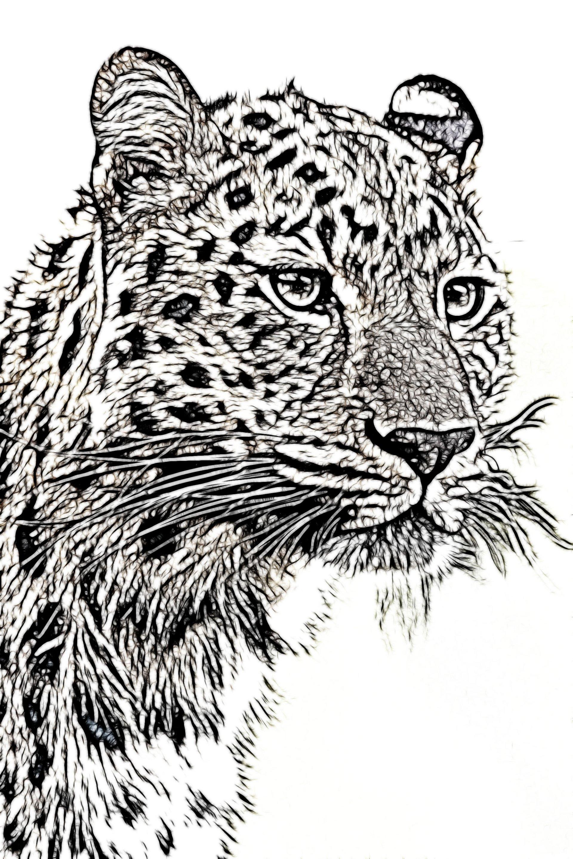 Art ID: 122140
