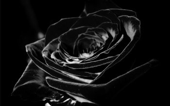 Gallery ID: 26 Flowers