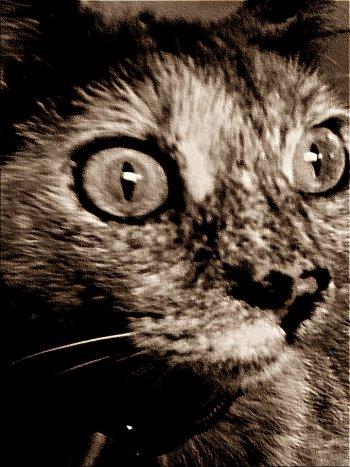 Gallery ID: 4378 Cat