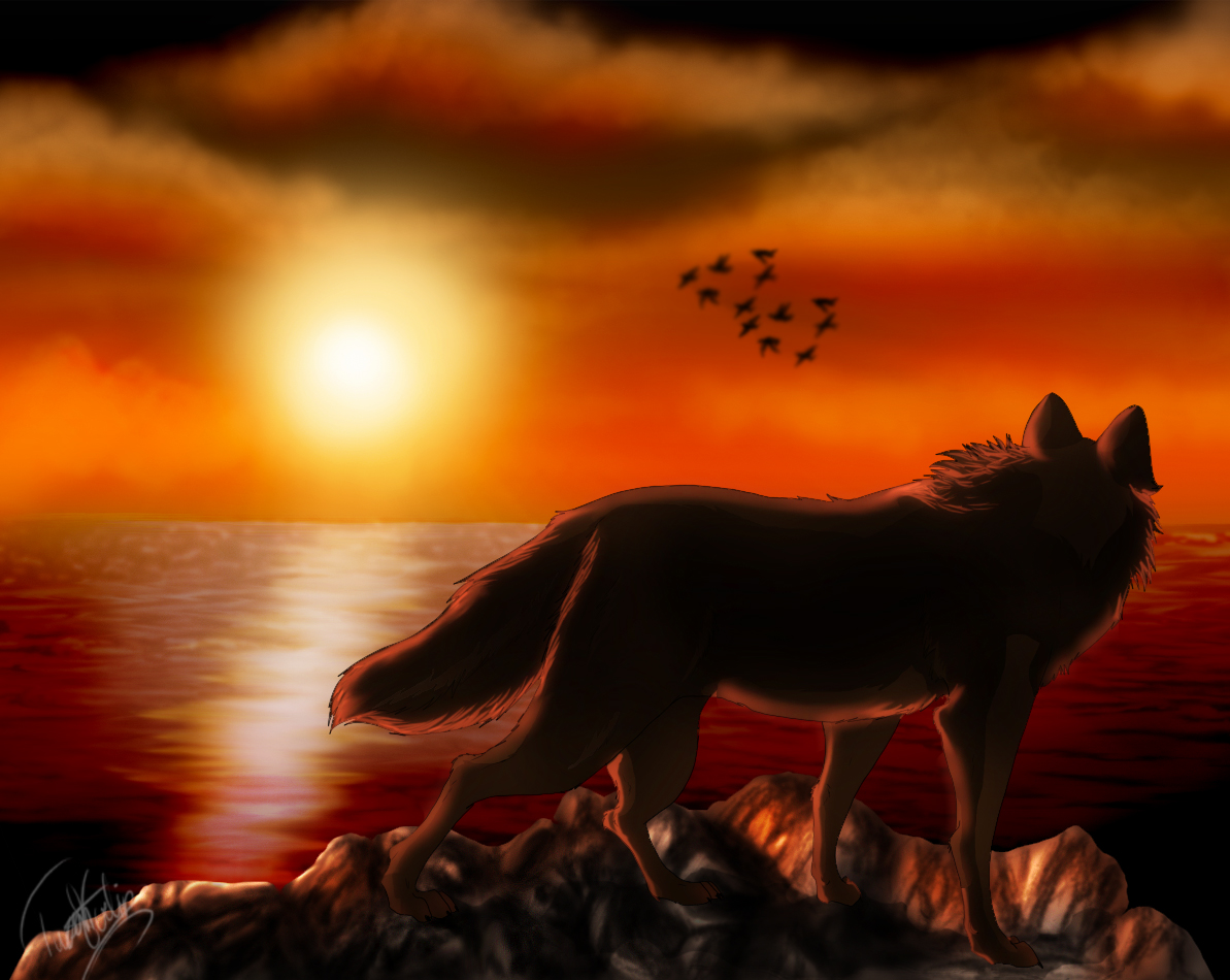 wolf sunset Quotes