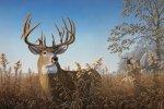 Preview Deer